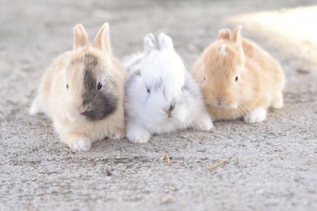 ウサギ 英語